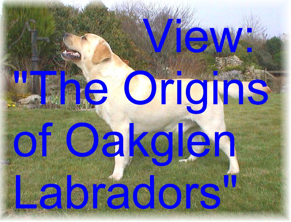 View the Origins of Oakglen Labradors